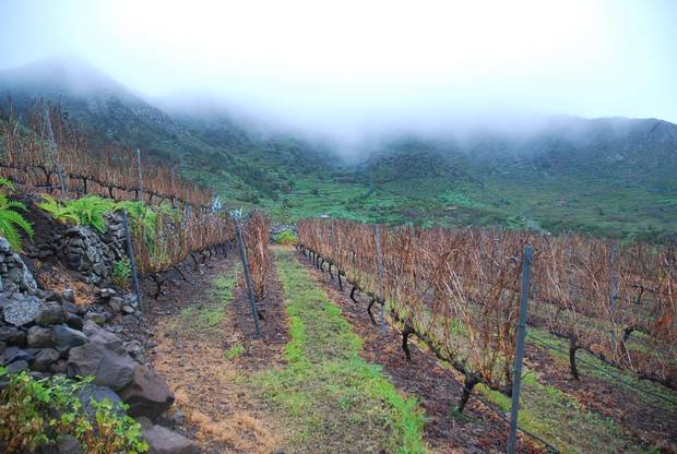 Vineyards such as Bodegas Viñátigo play up the Canary Islands' unique climate and varietals.