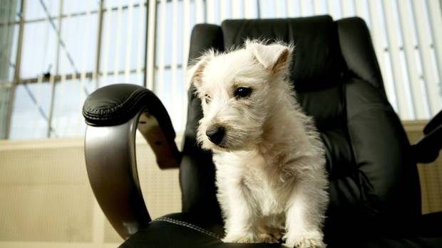This Friday is the 15th anniversary of Take Your Dog to Work Day. That means, in some canine-friendly workplaces, pooches will be prowling. (Jupiterimages/Getty Images)