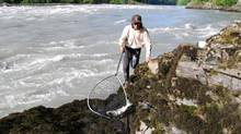 Nass River and Gitanyow First Nation members fishing for salmon. (Gitanyow First Nation)