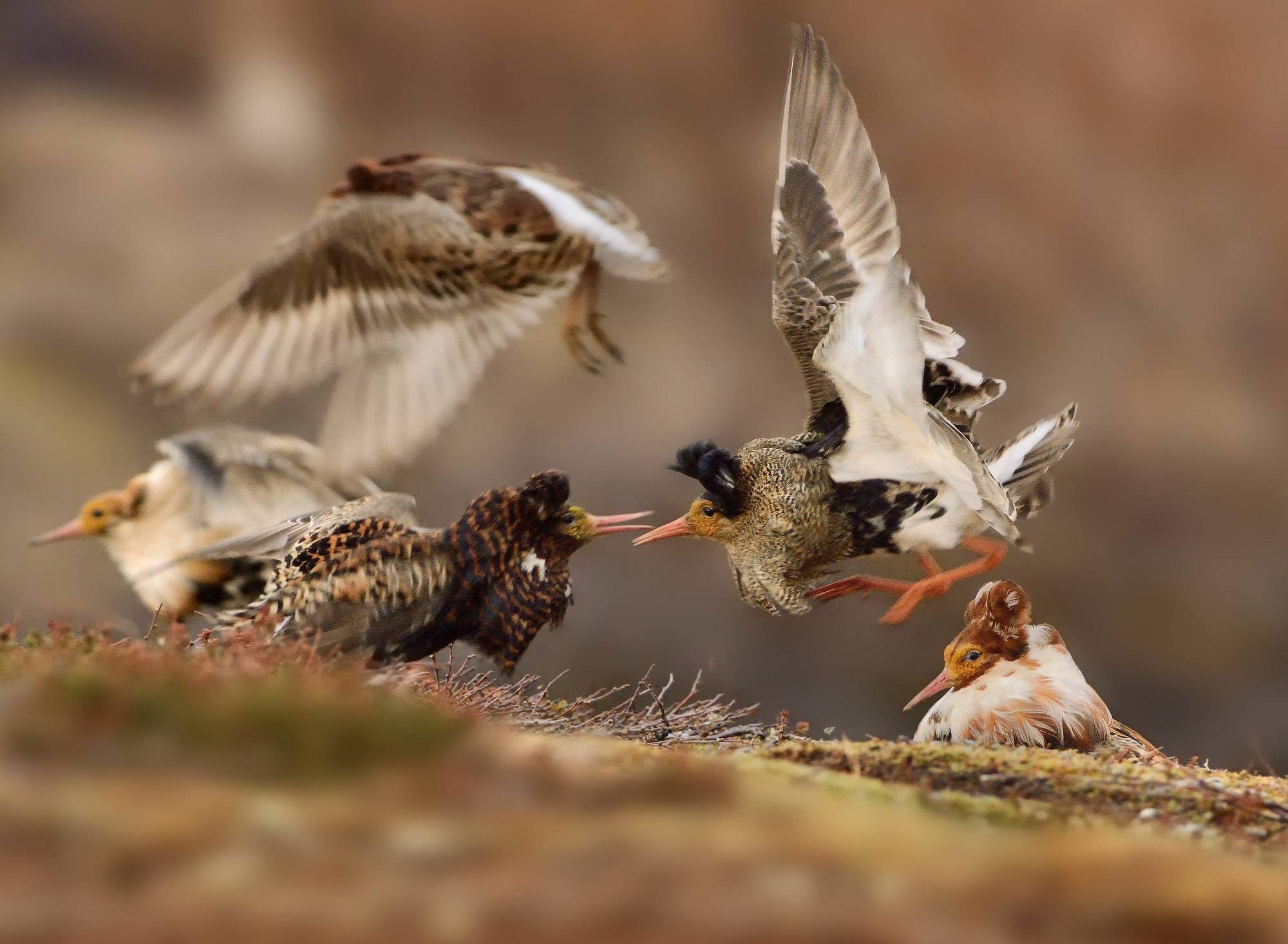 Canadian physician wins Wildlife Photographer of the Year 2015