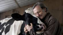 Lawrence Andres with Ciara, one of the dairy cows that produces milk for Harmony Organic (Chloë Ellingson)