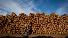 Gordon Sitter, manufacturing superintendent at Interfor's Acorn Division, walks past logs to be processed at the company's mill in Delta, B.C., in September. (DARRYL DYCK FOR THE GLOBE AND MAIL)