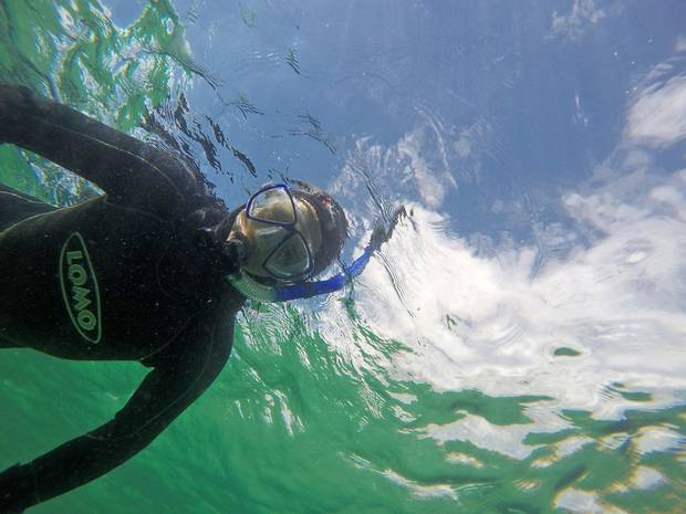 Dealing with the cold is part of the fund while snorkelling in the Scottish Highlands. Crystal-clear waters adn wildlife abound