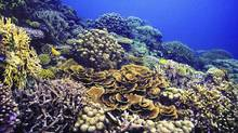 The high diversity of coral reefs is currently threatened by human activities and the poor performance of conservation strategies. (HO/CP)