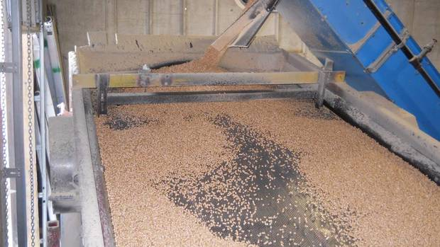 After the wood pellets have been formed, they are screened to shake off the dust, which is then recycled to form more pellets. Here, they are being screened at a pellet plant in Kelowna, B.C. (Gordon Murray/Wood Pellet Association of Canada)