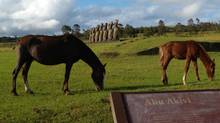 Thousands of horses roam free on Easter Island, even using the famous statues as scratching posts. (Lucas Aykroyd)