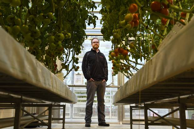 David Liscombe is a research scientist with the Vineland Research and Innovation Centre, which is researching how the taste and flavour of tomatoes has been changed by the industrialization of agriculture.