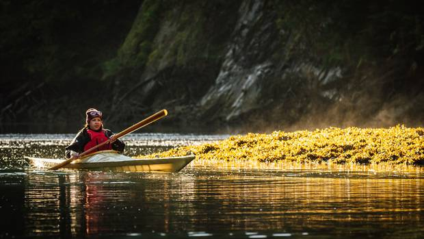 Time for some quiet reflection: Cyndi Peal takes an afternoon kayak ride through the still waters around Hlk'yah GawGa (Windy Bay) in Haida Gwaii.