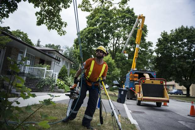 In Etobicoke on Friday, July 29 City of Toronto arborists perform maintenance to a tree by cutting off dead and dangerously hanging tree limbs and branches in an effort to increase the tree's lifespan and reduce the hazard of falling and dead branches. The branches, limbs and leaves are then processed through a large woodchipper, and the site is cleaned.