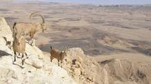 The Makhtesh Roman is the world's largest erosion crater. (Thinkstock)