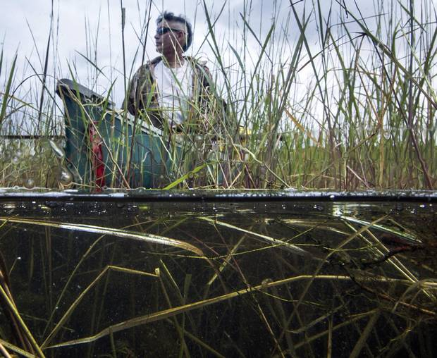 James Whetung collects wild rice on Upper Chemong Lake at Curve Lake First Nation, Ont.