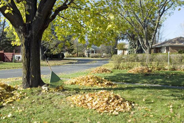 Book a certified arborist to remove dead branches and trees.