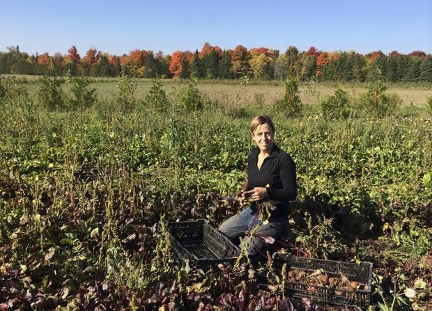 Gillian Flies, Brent Preston's wife, works in the field on their farm near Shelburne, Ont.