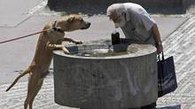 A man and a dog drink water from a fountain during a sunny day in Prague as temperatures hovered over 28 degrees Celsius on July 12, 2011. (David W Cerny/Reuters/David W Cerny/Reuters)