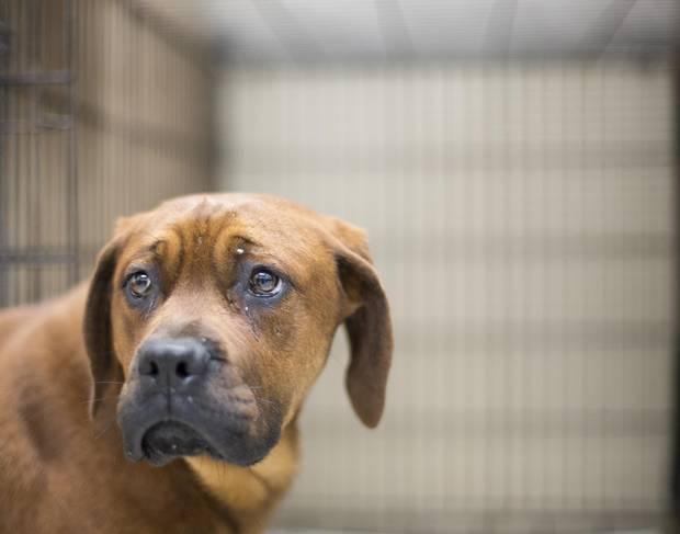 Rescue dog Rupert.