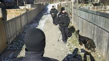 Police officers with a dog walk through the yards around townhouse units near Ardglen Drive in Brampton on Jan. 24, 2013 where 9-year-old Kesean Williams was shot late Wednesday evening. (Peter Power/The Globe and Mail)