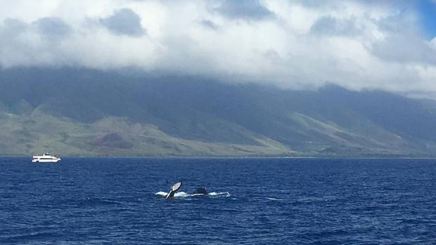 In Maui and Kauai, I found a vacation unlike anything I