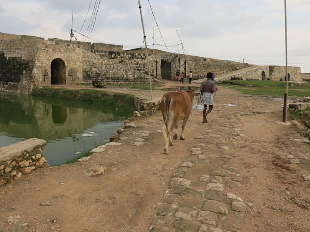 Jaffna Fort, built during the Portuguese occupation of Sri Lanka. During the war, it was controlled by the Tamil Tigers until 1995, and then taken by the Sri Lankan Army. Now, it's mostly a historical site locals and visitors come to and one where cattle are brought to graze.