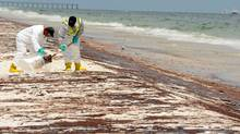 Crews work to clean up oil washed ashore at Pensacola Beach in Florida. (Michael Spooneybarger/AP)
