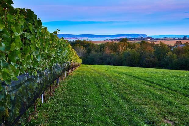 Lightfoot & Wolfville vineyard began producing its own wine five years ago.