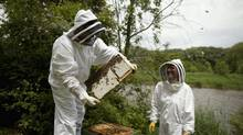 Mario Borsato and his daughter Diane say beekeeping has become a shared passion. (Moe Doiron/The Globe and Mail)