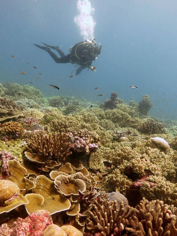 A researcher surveys the reef on Kiritimati in 2013 before the El Nino bleaching event.