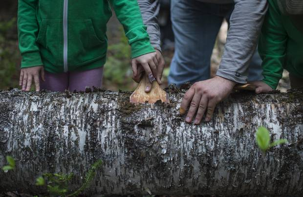 Corbin Hart teaches his twins Nakuset, left, and Tepkunaset how to use a curved paddle to remove winter bark from the body of a birch tree.
