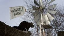 A report by Toronto's city manager recommends selling or closing Riverdale Farm. (Peter Power/The Globe and Mail/Peter Power/The Globe and Mail)