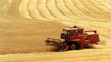 A farmer combines a field of wheat along Glenmore road north in Kelowna, B.C. on Friday, Aug. 17, 2001. (Gary Nylande/CP)