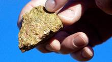"A piece of bastnasite ore, which contains rare earth elements, is shown by Brock O'Kelly from Molycorp Minerals Mountain pass Mine in Mountain Pass, Califonia August 19, 2009. The open-pit mine at Mountain Pass, California, holds the world's richest proven reserve of ""rare earth"" metals, a family of minerals vital to producing the powerful, lightweight magnets used in the engines of Toyota Motor Corp's Prius and other hybrid vehicles as well as generators in wind turbines. (DAVID BECKER/DAVID BECKER/REUTERS)"