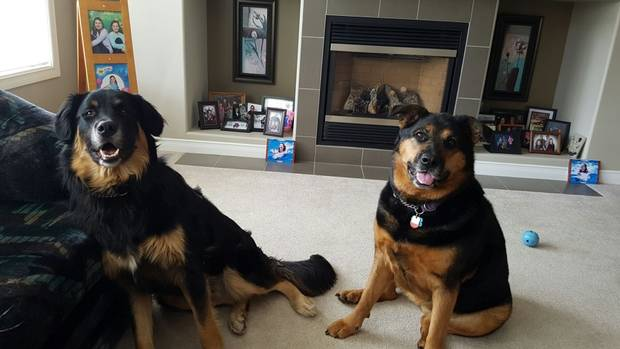 Kujo and Kaluah, two dogs belonging to Fort McMurray evacuee Chas Coley, 27.