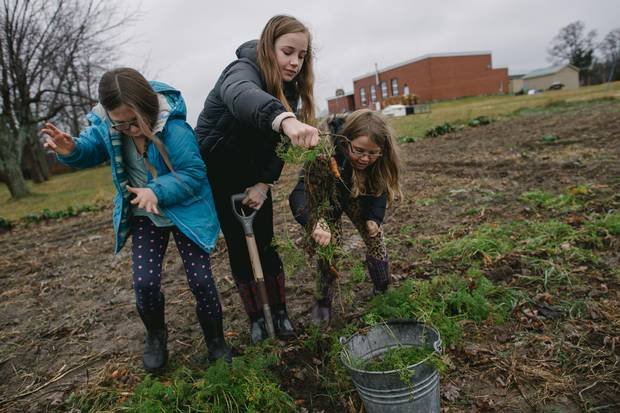 Reya, Wini and Ruby digging up the last remaining carrots in the vegetable garden, located in the back of the school.