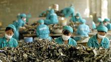 "Young Chinese women sort through piles of scrap metal at the Shanghai Sigma Metals Inc. facility in Shanghai, China. They earn about $125 a month, which is ""not much money,"" concedes their boss. (Fred Lum/The Globe and Mail/Fred Lum/The Globe and Mail)"