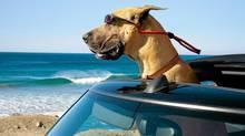 Marmaduke moves to California with his ?fam?: Think The O.C., but for canines. (Joseph Ledere/AP/Joseph Ledere/AP)