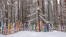 In Kimberly, B.C., locals plant their old skis beside the highway. The fence gets longer every year. (Bruce Kirkby)