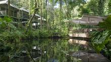 Daintree Eco Lodge in Queensland, Australia is a green escape.