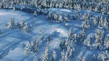 The record cold could be killing off tree-eating forest pests, U.S. biologists say. (Photos.com)