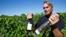 Vineyard manager Scott Jones of Southbrook Vineyards in Ontario's Niagara region. (Glenn Lowson For The Globe and Mail)