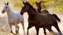 Horses charging. (Photos.com)