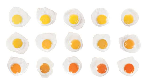 While North Americans traditionally prefer a more lemon-yellow yolk, many countries in Europe and the Far East prefer a deeper orangey yolk.