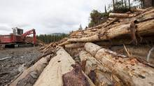 B.C.'s supply of timber has dwindled steadily since the pine-beetle infestation began in 1999. In the next 10 to 15 years, the timber supply is forecasted to be 20 per cent below pre-infestation levels – a reduction that may last up to 50 years. (ARNOLD LIM/The Globe and Mail)