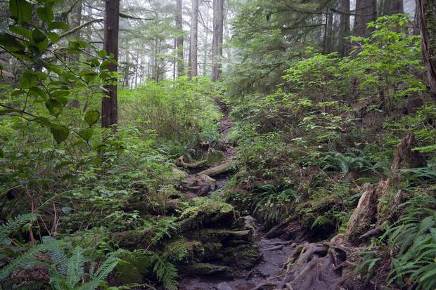 A path through the rain forest on the West Coast Trail in Pacific Rim National Park.