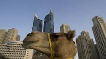 Dubai and Oman offers lots of interesting sights. (STEVE CRISP/REUTERS)