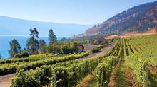 CedarCreek vines in the Okanagan, B.C. (Globe files/Globe files)