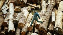 With softwood lumber prices strengthening in 2012, producers are expected to report healthy third-quarter financial results. (JOHN LEHMANN/The Globe and Mail)