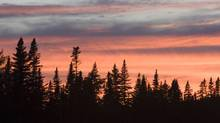 Trees are silhouetted as the sun sets behind them in Gros Morne National Park. (JONATHAN HAYWARD/Jonathan Hayward/The Canadian Press)