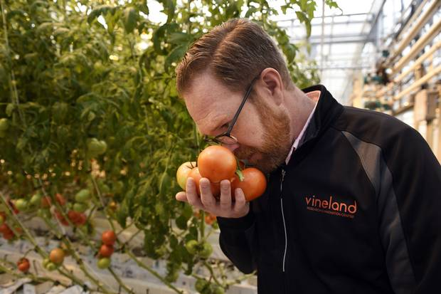 David Liscombe takes in the aroma of tomatoes grown in the centre's greenhouse.