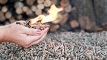 Wood pellets can be used to heat homes or as energy in factories. (Tatyana Aleksieva-Sabeva/Getty Images/iStockphoto)