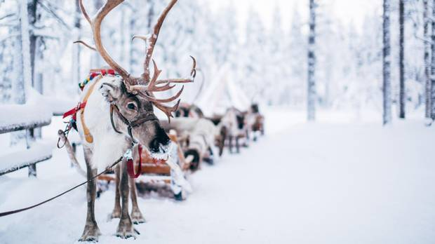 Rovaniemi, a serene town in northern Finland, is home to roughly 60,000 people, varied saunas, reindeer farms and Santa Claus himself.