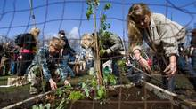 UVic students dig flower beds in front of a campus library, in part to protest the university?s inaction on a communal agriculture project. (Geoff Howe for The Globe and Mail)